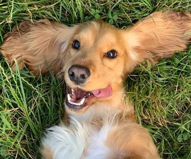 Dog Parks: 5 Frequently Asked Questions about Dog Parks